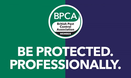 MEMBERSHIP WITH BPCA OBSERVER IN DUBAI